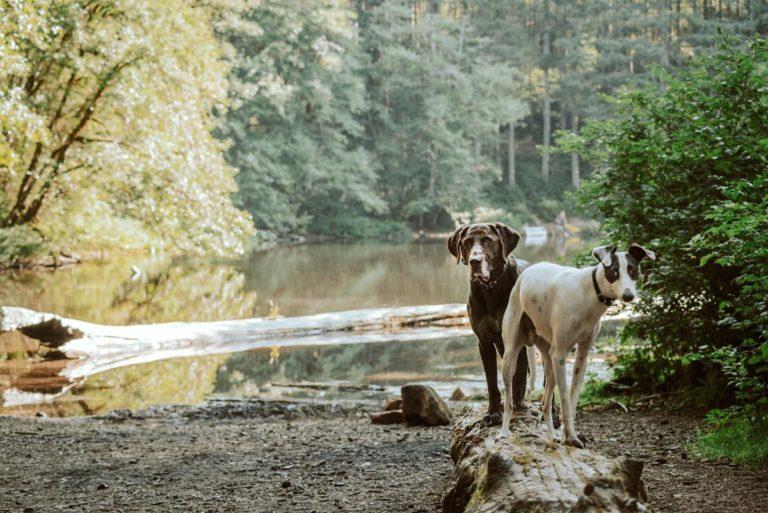 Prawidłowe karmienie psa jest bardzo ważne dla jego zdrowia