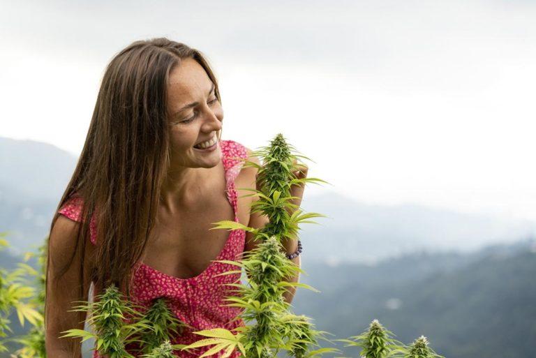 Jak kupić i wyhodować nasiona marihuany