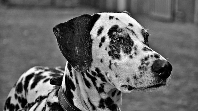 Świetna rada, jak wytresować psa